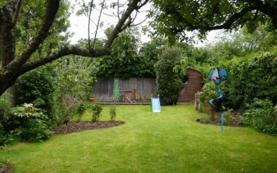 Lawn reshapes and added planting for colour all year